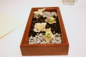 Canapes - Crispy Beef Tendon with Cannellini Bean Puree; Crispy Fish Skin with Pea Puree