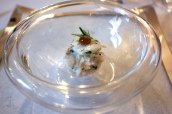 Cornish Crab with Marinated Scallop, Verjus Gel, Granny Smith Apple, Kohlrabi and Turnip