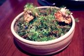 Mushroom cake, juniper, fennel
